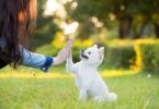 宠物行业催生新职业,从业者月收入过万元!
