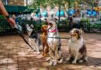2020今年宠物行业新机会 新经销商转型之百年机遇